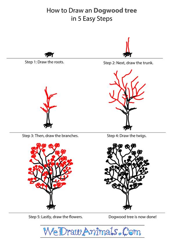 How to Draw a Dogwood Tree - Step-by-Step Tutorial