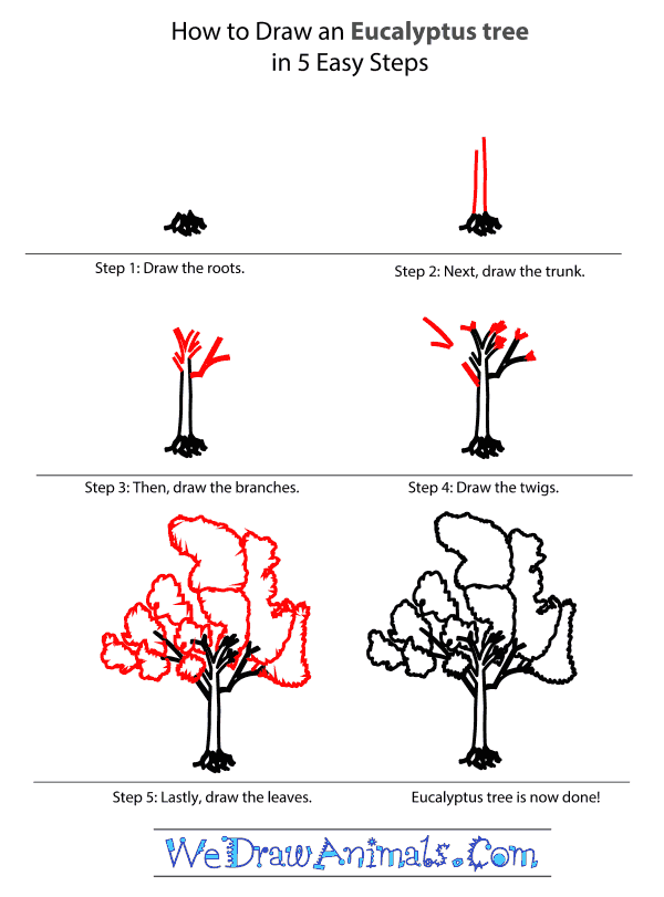 How to Draw an Eucalyptus Tree - Step-by-Step Tutorial