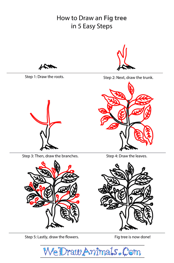 How to Draw a Fig Tree - Step-by-Step Tutorial