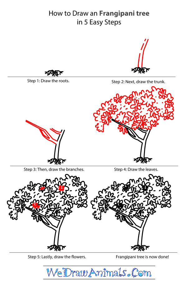 How to Draw a Frangipani Tree - Step-by-Step Tutorial