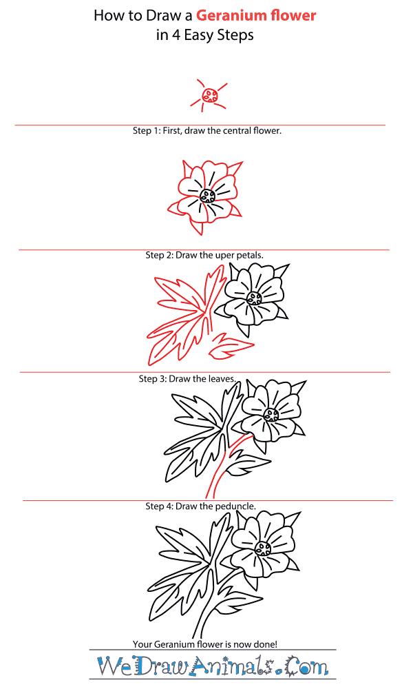 How to Draw a Geranium Flower - Step-by-Step Tutorial