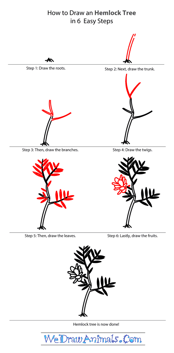 How to Draw a Hemlock Tree - Step-by-Step Tutorial
