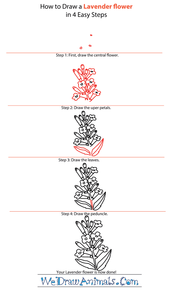 How to Draw a Lavender Flower - Step-by-Step Tutorial
