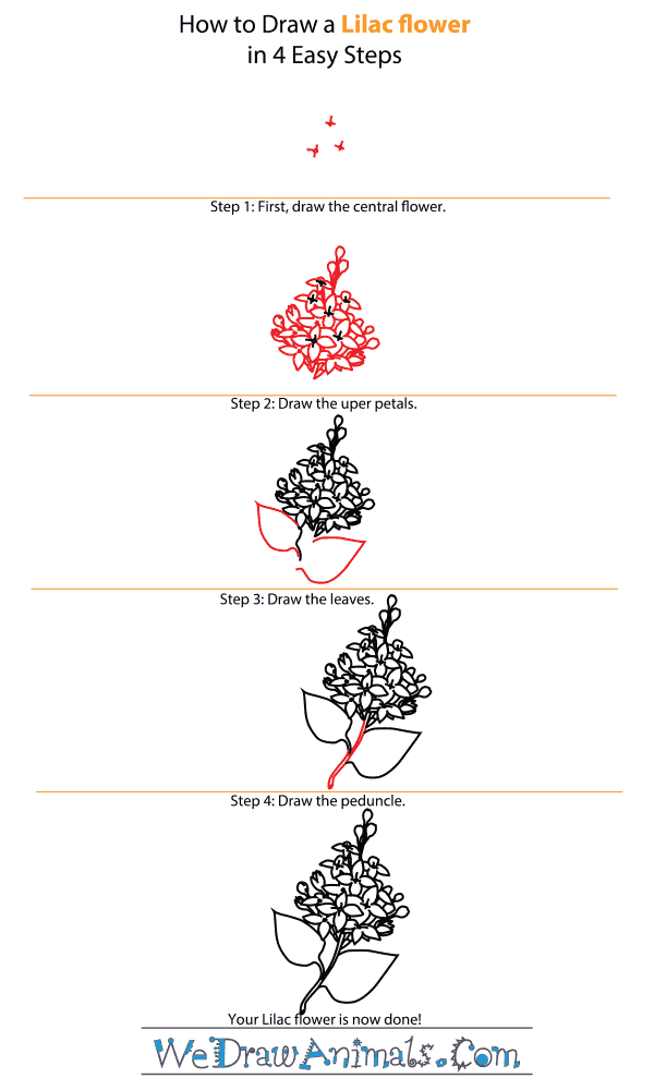 How to Draw a Lilac Flower - Step-by-Step Tutorial