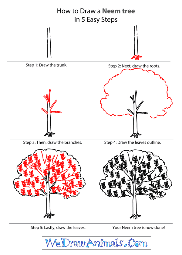 How to Draw a Neem Tree - Step-by-Step Tutorial