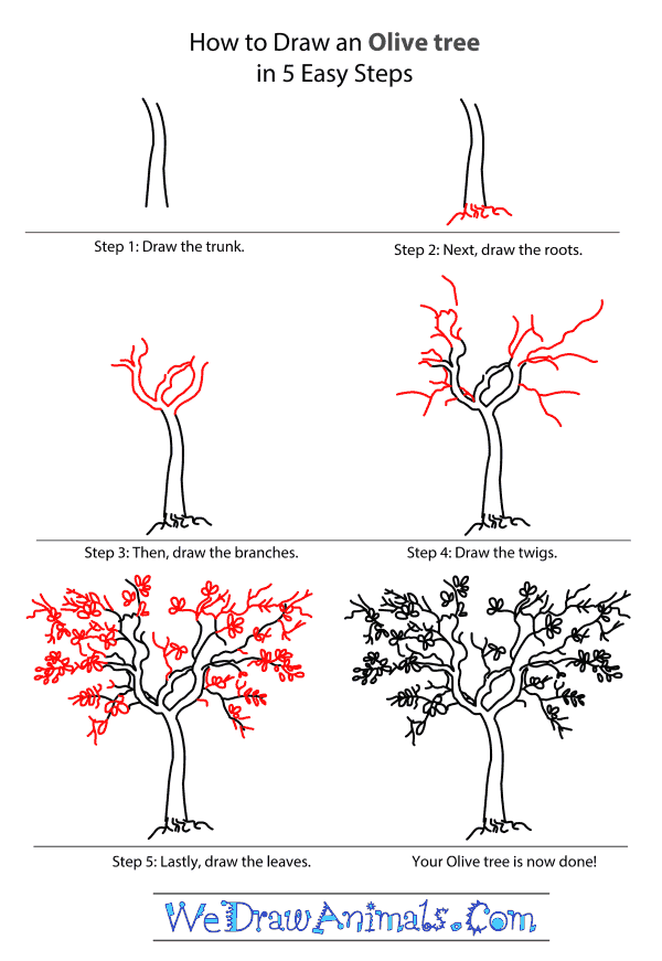 How to Draw an Olive Tree - Step-by-Step Tutorial