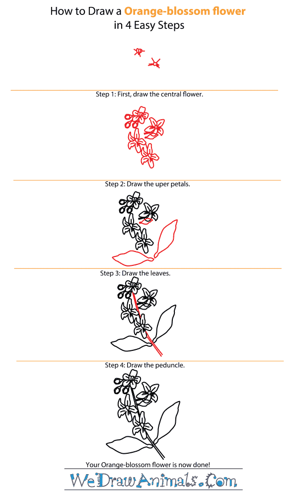 how to draw an orange blossom flower