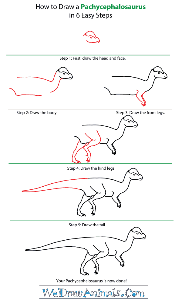 How to Draw a Pachycephalosaurus - Step-by-Step Tutorial