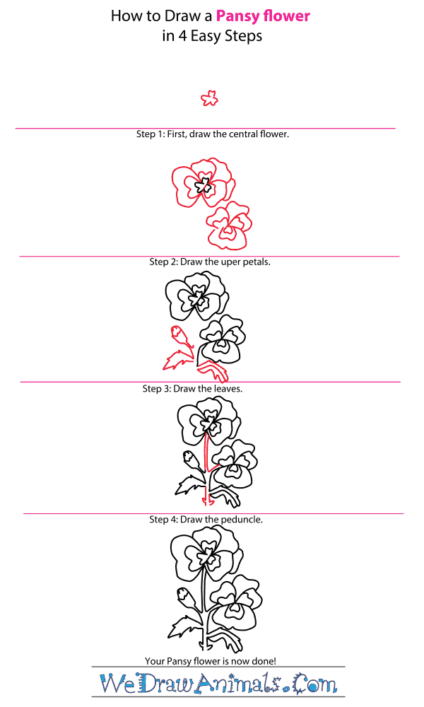 How to Draw a Pansy Flower - Step-by-Step Tutorial