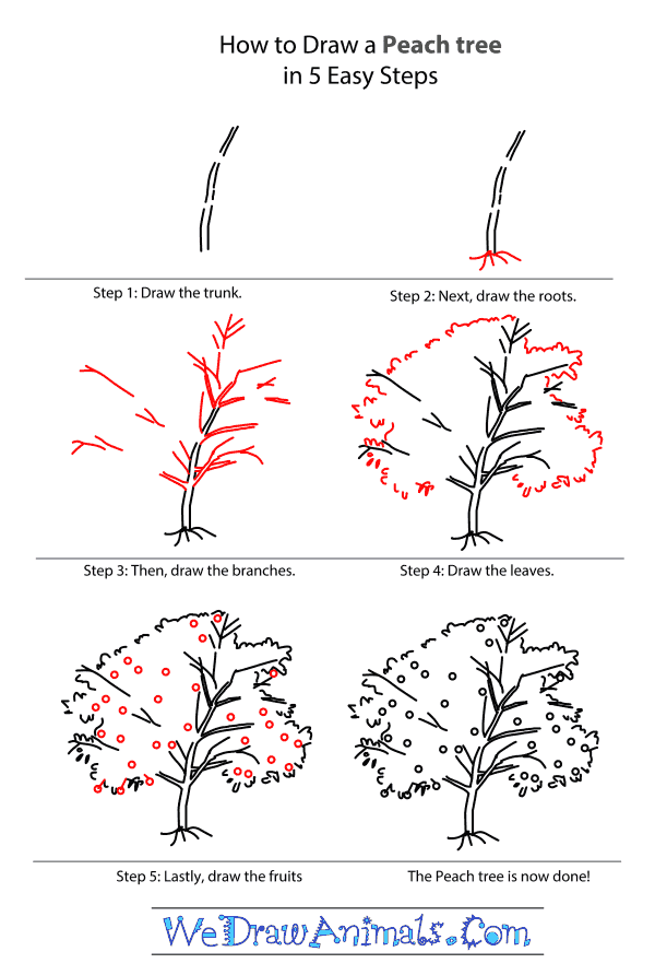 How to draw a peach tree step by step tutorial