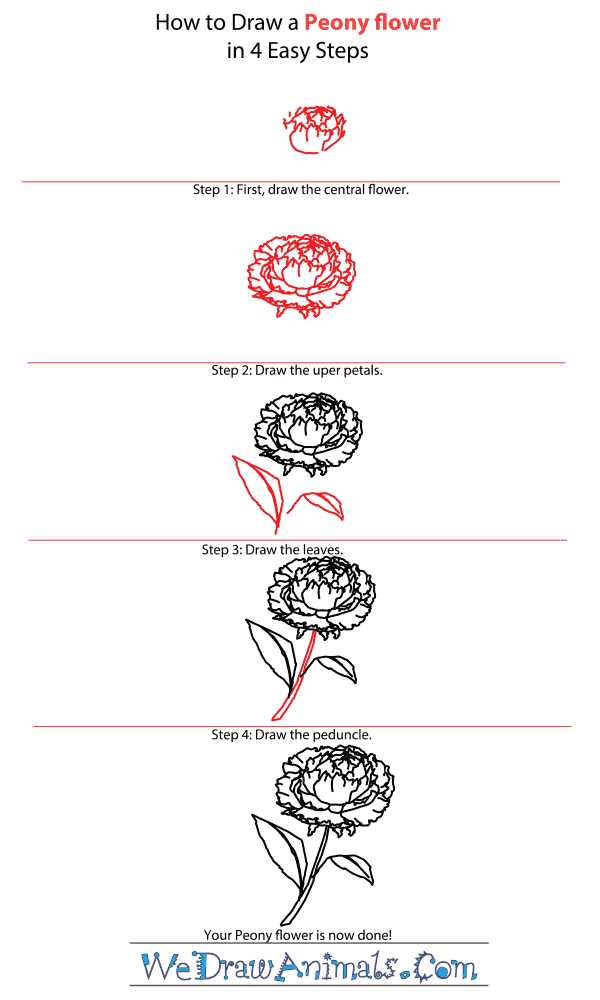How to Draw a Peony Flower - Step-by-Step Tutorial