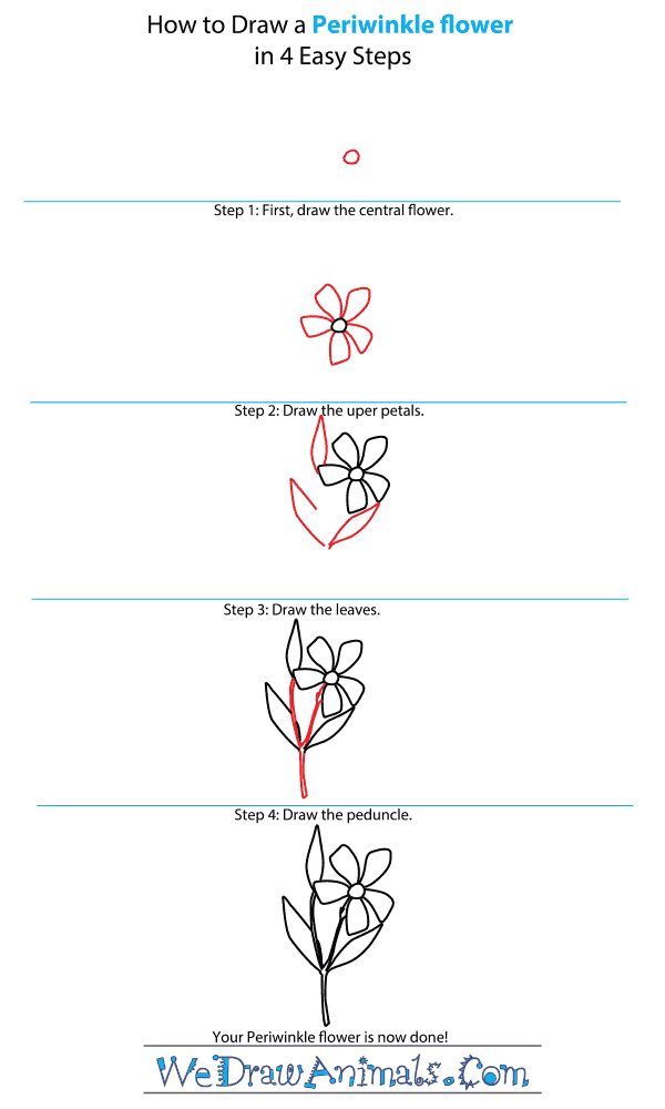 How to Draw a Periwinkle Flower - Step-by-Step Tutorial