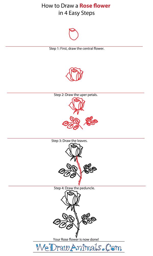How to Draw a Rose Flower - Step-by-Step Tutorial