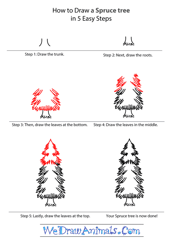 How to Draw a Spruce Tree - Step-by-Step Tutorial