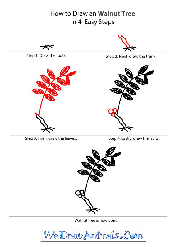 How to Draw a Walnut Tree - Step-by-Step Tutorial