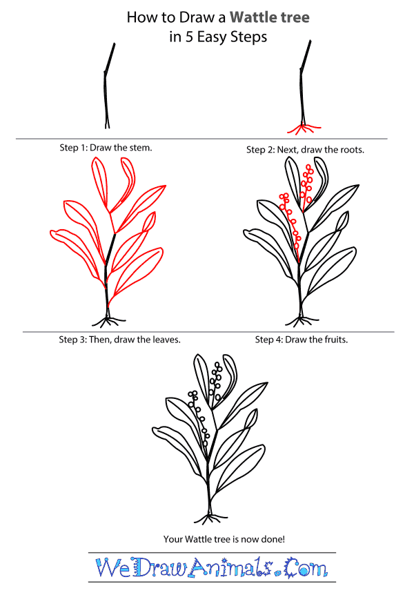 How to Draw a Wattle Tree - Step-by-Step Tutorial