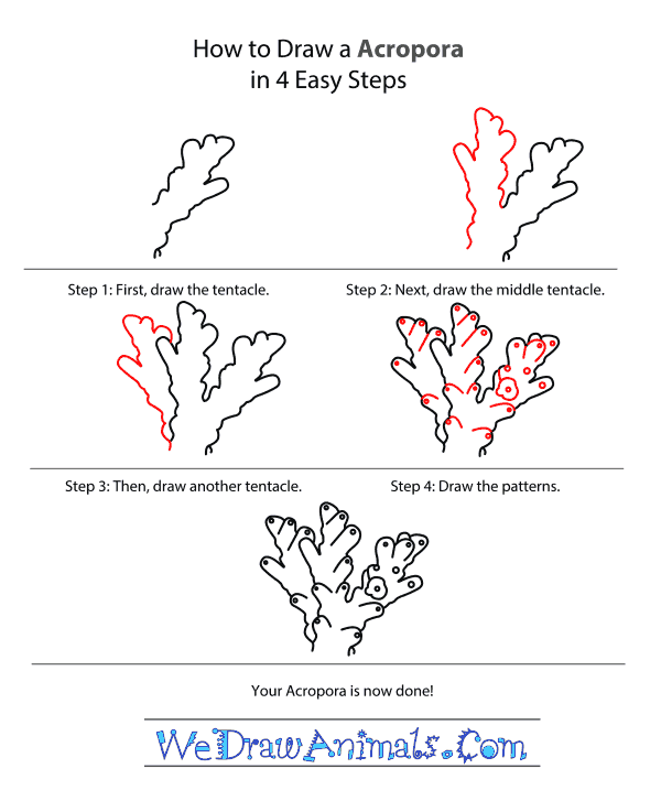 How to Draw an Acropora - Step-by-Step Tutorial