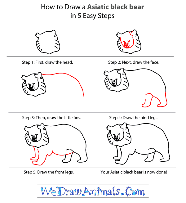 How to Draw an Asiatic Black Bear - Step-by-Step Tutorial