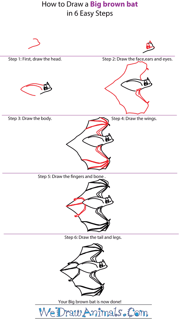 How to Draw a Big Brown Bat - Step-by-Step Tutorial