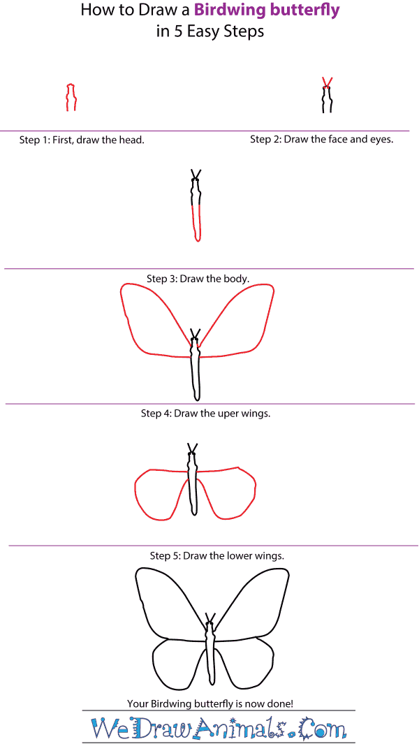 How to Draw a Birdwing Butterfly - Step-by-Step Tutorial