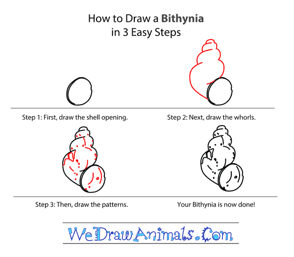 How to Draw a Bithynia - Step-by-Step Tutorial