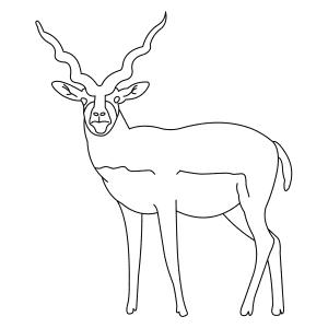 blackbuck-thumb