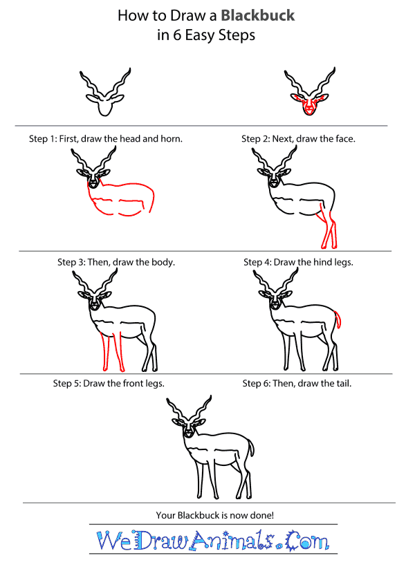 How to Draw a Blackbuck - Step-by-Step Tutorial