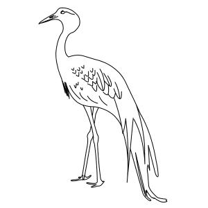 blue-crane-thumb