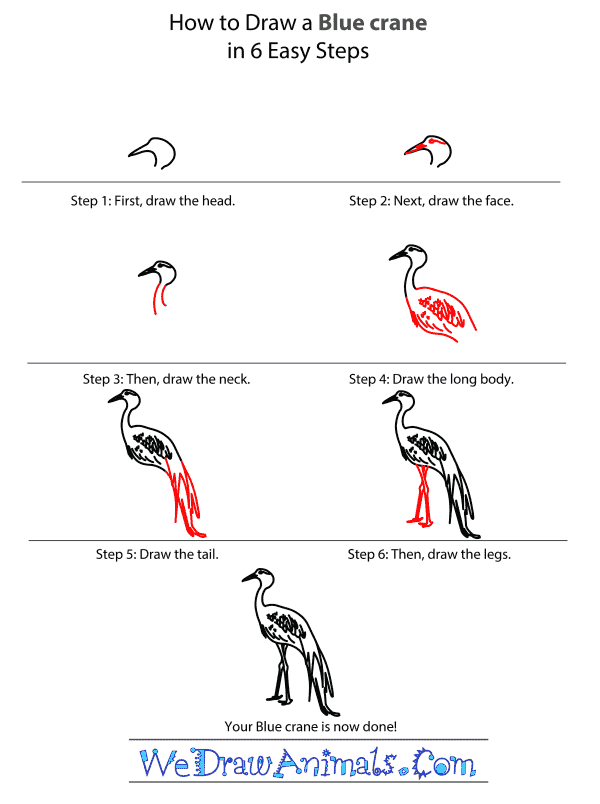 How to Draw a Blue Crane - Step-by-Step Tutorial