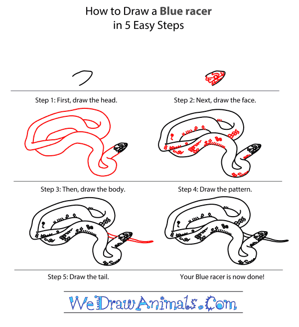 How to Draw a Blue Racer - Step-by-Step Tutorial