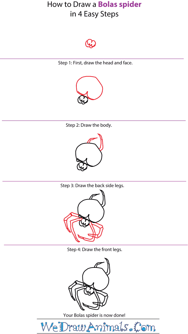 How to Draw a Bolas Spider - Step-by-Step Tutorial