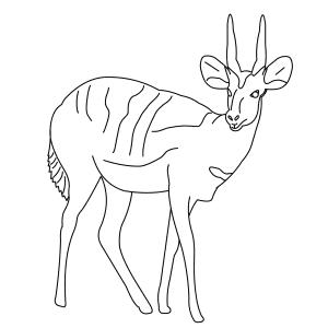 bushbuck-thumb