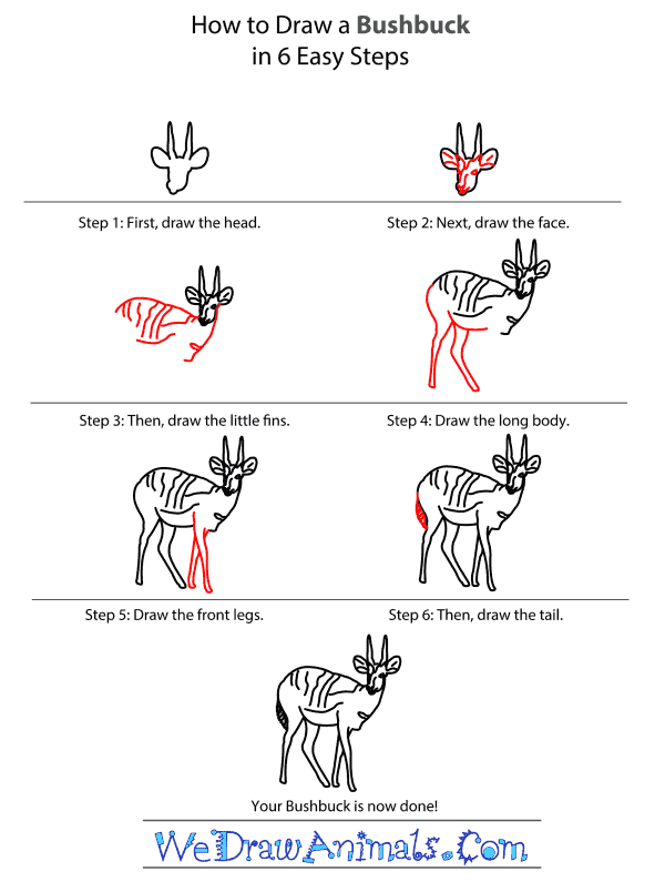 How to Draw a Bushbuck - Step-by-Step Tutorial