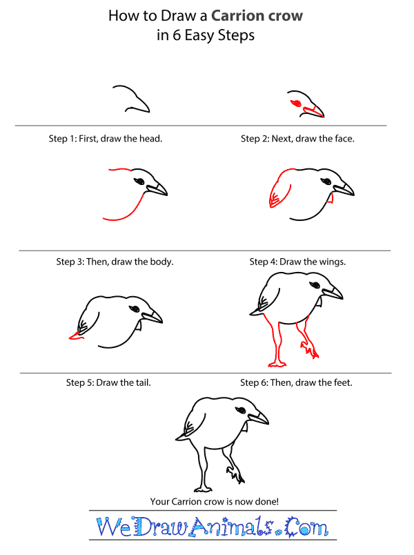 How to Draw a Carrion Crow - Step-by-Step Tutorial