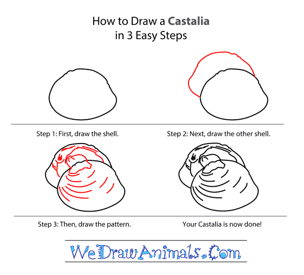 How to Draw a Castalia - Step-by-Step Tutorial