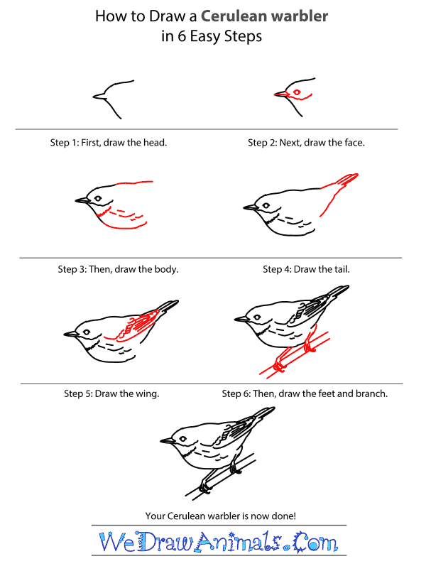 How to Draw a Cerulean Warbler - Step-by-Step Tutorial