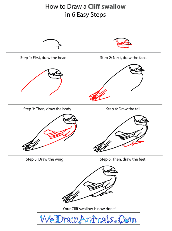 How to Draw a Cliff Swallow - Step-by-Step Tutorial