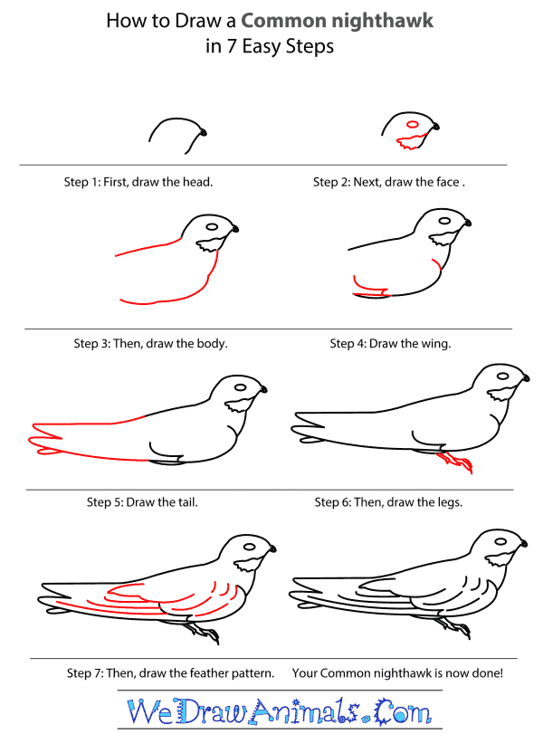 How to Draw a Common Nighthawk - Step-by-Step Tutorial
