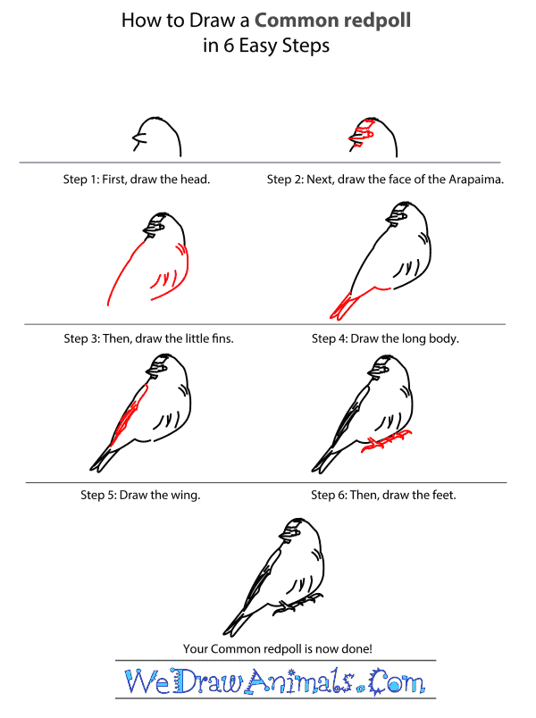 How to Draw a Common Redpoll - Step-by-Step Tutorial