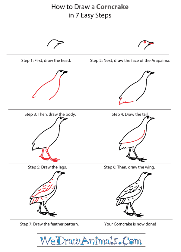 How to Draw a Corncrake - Step-by-Step Tutorial