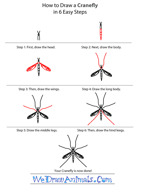 How to Draw a Cranefly - Step-by-Step Tutorial