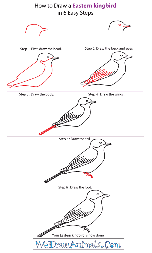 How to Draw an Eastern Kingbird - Step-by-Step Tutorial