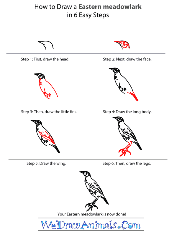 How to Draw an Eastern Meadowlark - Step-by-Step Tutorial