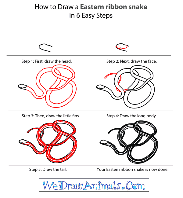 How To Draw An Eastern Ribbon Snake