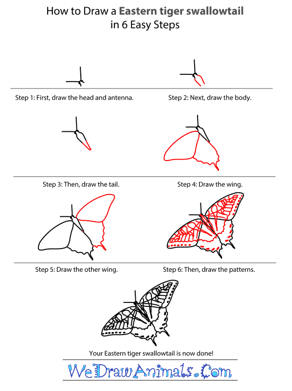 How to Draw an Eastern Tiger Swallowtail - Step-by-Step Tutorial