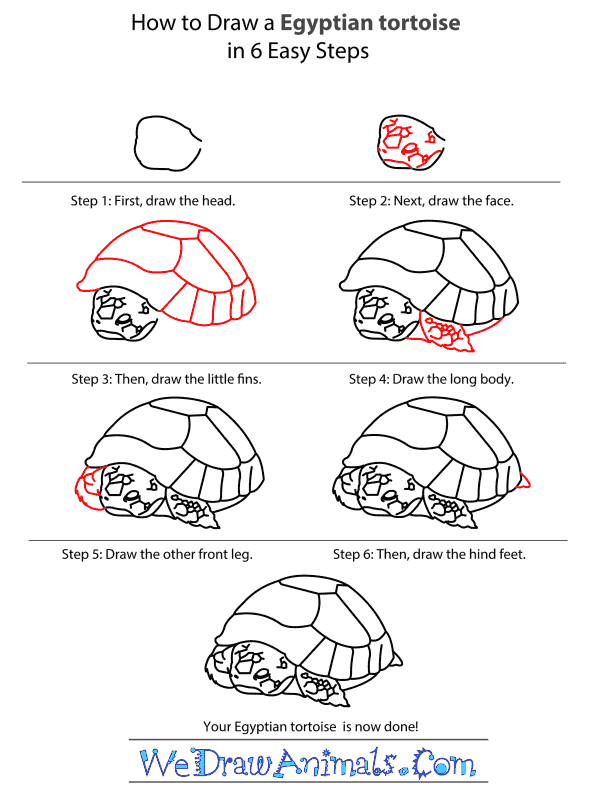 How to Draw an Egyptian Tortoise - Step-by-Step Tutorial