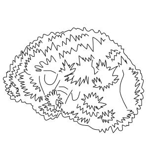 elegance-coral-thumb