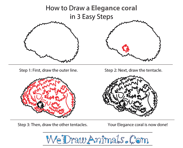 How to Draw an Elegance Coral - Step-by-Step Tutorial