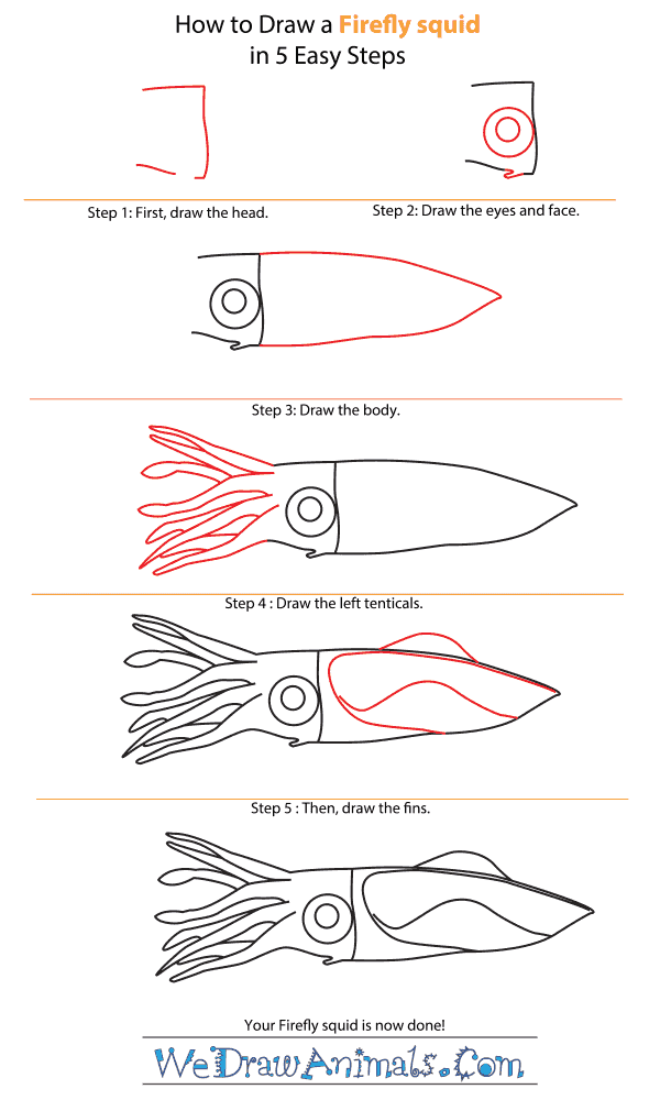 How to Draw a Firefly Squid - Step-by-Step Tutorial
