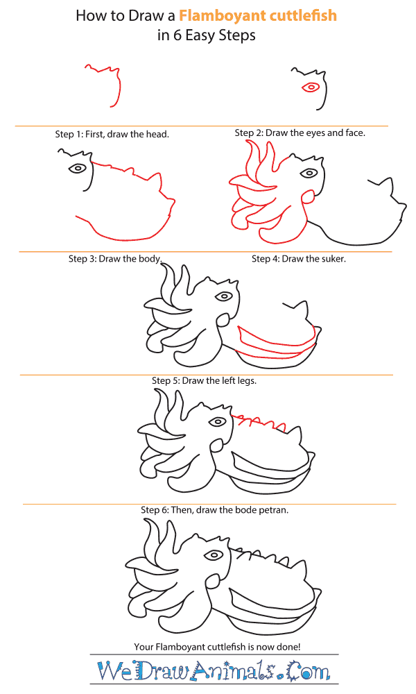 How to Draw a Flamboyant Cuttlefish - Step-by-Step Tutorial